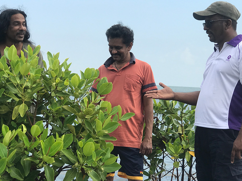 Becoming friends with a few strangling mangroves off the coast of one of the outer islands