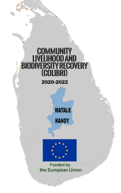 Livelihood and Biodiversity Recovery in the Knuckles