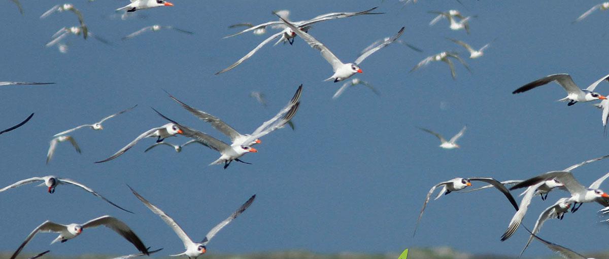Birds on the wing at Vankalai