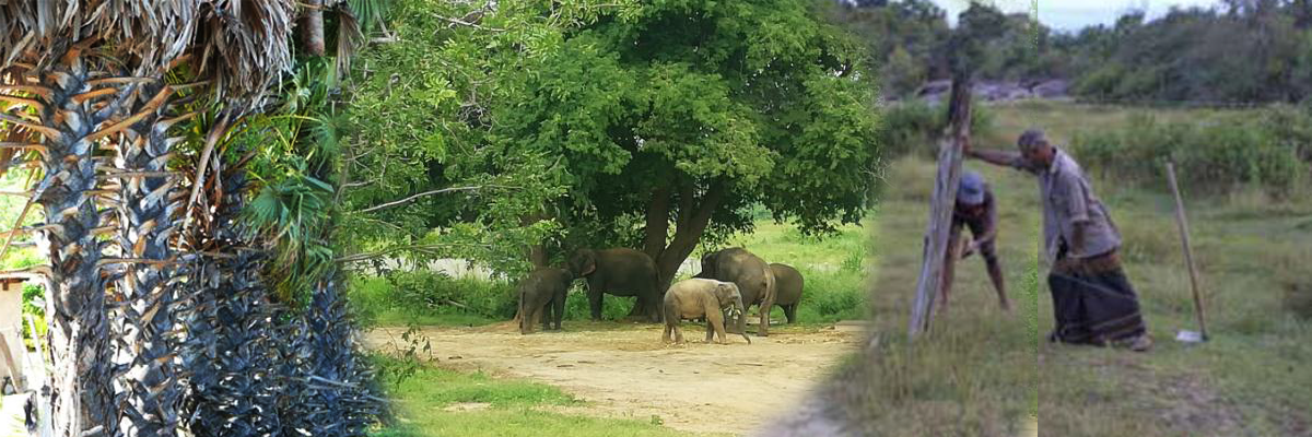 Fencing against wildlife intrusion Sri Lanka