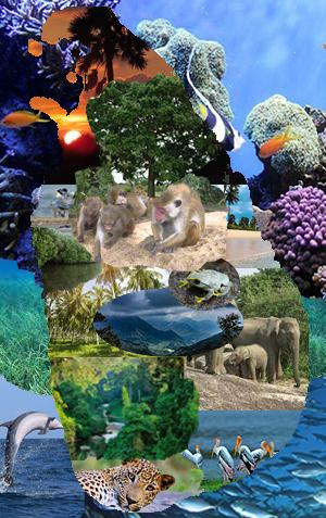 Biodiversity mapping