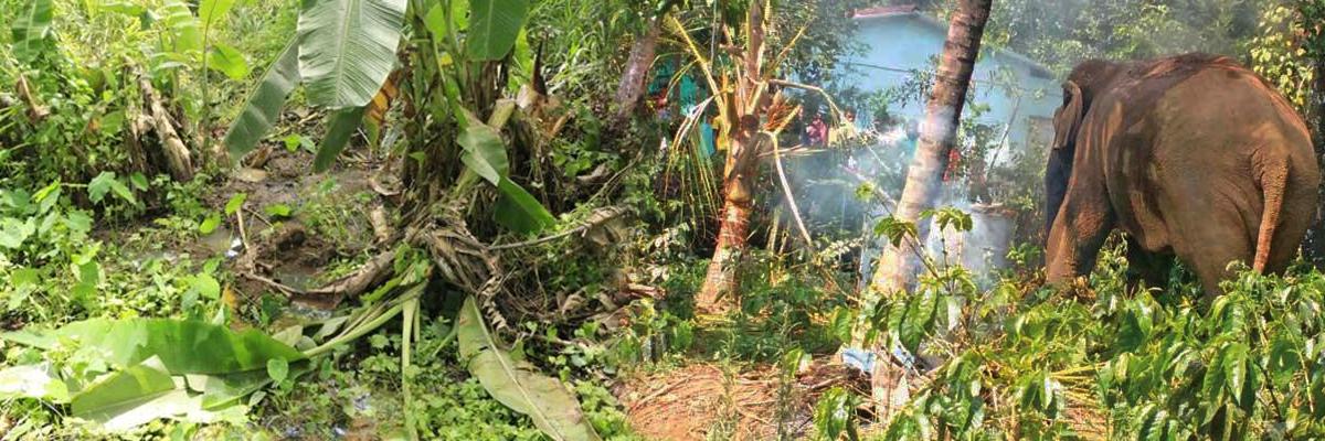 wildlife crop damage sri lanka