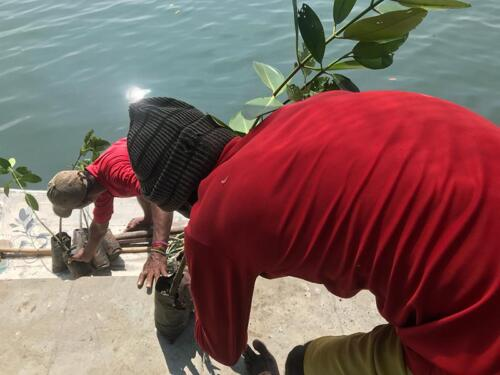 The boys transporting the saplings to the lagoon