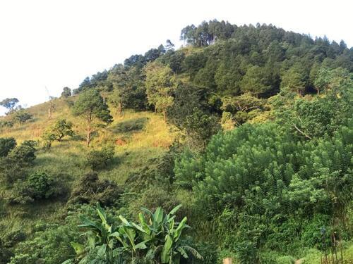 Natural fires scar the landscape at Hunnasgiriya