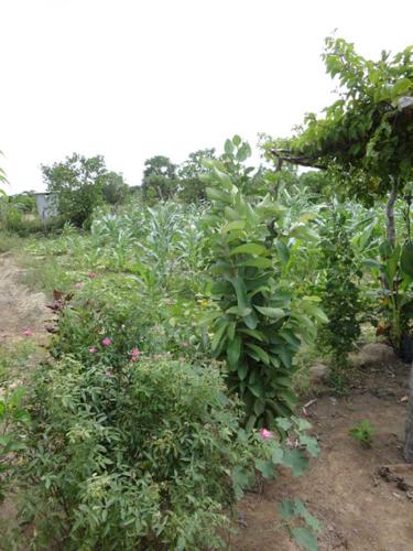 monocrop-agriculture