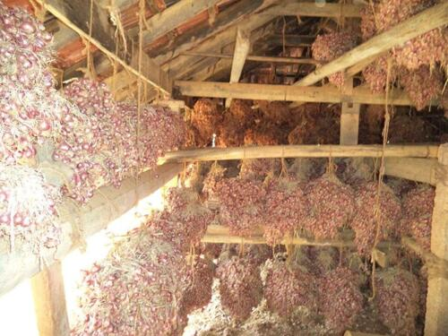 red-onion-drying-northern-province